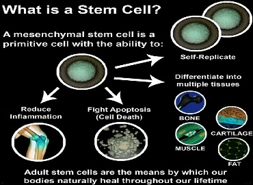 placental stem cells maui